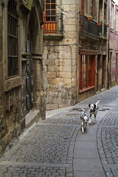Black and white dalmations walking down the street    Crush Cul de Sac
