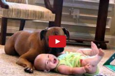 A dog is left alone with a baby and THIS happens... http://y94.com/blogs/the-morning-playhouse-blog/956/video-baby-was-left-alone-with-a-dog-this-happened/