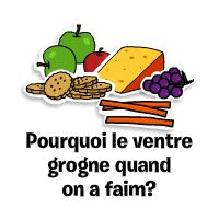 Capsules éducatives sur l\'alimentation et la nourriture   MIAM!
