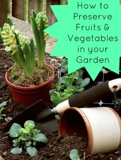 How to Preserve Fruits & Vegetables in Your Garden - Not Quite Amish Living