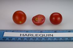 Harlequin tomato, grown at Rutgers NJAES research farms. Farms In Nj, Growing Tomatoes In Containers, Fruits Images, Vegetables, Photos, Food, Pictures, Essen, Vegetable Recipes