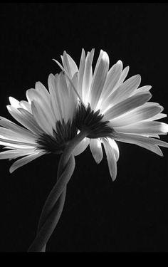 293 Meilleures Images Du Tableau Fleurs En Noir Et Blanc En 2019