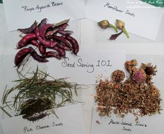 DIY ~ Seed Saving 10