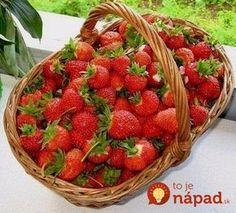 Chcete bohatú úrodu jahôd? Dajte im tento elixír života z kuchyne a odvďačia sa vám záplavou veľkých plodov! Diy And Crafts, Berries, Strawberry, Fruit, Gardening, Farming, Education, Bathroom, Ideas