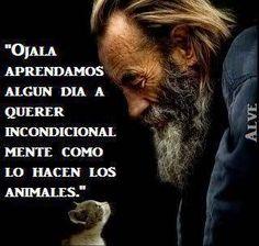 ESTAMOS EVOLUCIONANDO,   ESTAMOS AMÁNDOLOS INCONDICIONALMENTE A TODOS LOS ANIMALES, COMO LO HACEN ELLOS CON NOSOTROS.