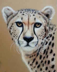 """Cheeta"" pasteldrawing"