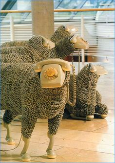 Telephone sheep See life from a different perspective
