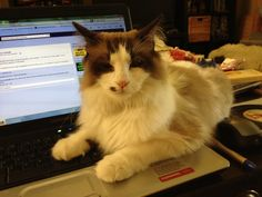 Checking out facebook  #worldsbestcatlitter