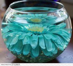Vaso con fiore e acqua