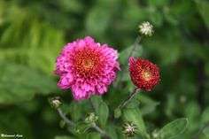 Flower 46 by Mohammad Azam