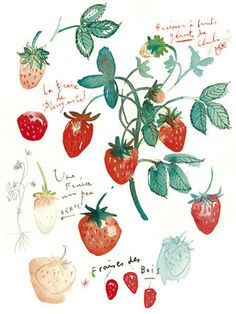 Kitchen art, Fruit print, Strawberry, Watercolor painting, 8X10, Botanical, Home decor, Food poster, red