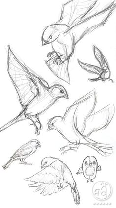 40 Free and Simple Animal Sketches Ideas and Inspirations for Drawing – Samir – Animal Draw… . Secrets of being well-groomed 40 Free and simple animal sketches Ideas and inspiration for drawing – Samir – Animal Draw… . Pencil Art Drawings, Bird Drawings, Art Drawings Sketches, Sketch Drawing, Drawing Ideas, Drawing Tips, Learn Drawing, Drawing Art, Simple Animal Drawings