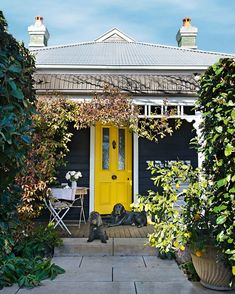 Weatherboard cottage in Bowral The bright yellow front door is painted with Dulux Midas Touch, while the exterior is painted in Taubmans Black Fox. Lulu the spoodle and labrador Monty stand guard Bright Front Doors, Yellow Front Doors, Front Door Colors, Cottage Exterior Colors, Exterior Color Schemes, House Paint Exterior, Cafe Exterior, Weatherboard Exterior, Country Home Exteriors