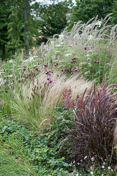 mooie combinatie: Stipa – Amsonia, Achillea, Artemisia, Eryngium, Papaver, Salvia