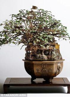 Takanori Aiba constructs tiny worlds around bonsai trees
