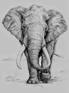 Pencil Drawing Of Elephant - Image discovered by sσρнια k. Pencil drawings elephant drawing and dumbo image the most amazing place for womens fashion. Elephant Face Drawing, Elephant Sketch, Elephant Illustration, Elephant Drawings, Image Elephant, Elephant Images, Elephant Wall Art, Pencil Drawings Of Animals, Animal Sketches