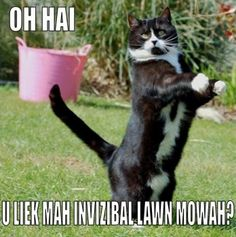 lolcats pictures lawnmowah