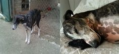 Before And After Photos Show How Much The Day Of Adoption Can Mean To A Shelter Pet