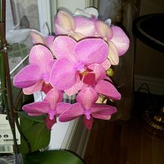 One of my orchid