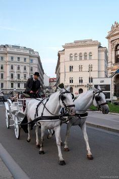 Horses, Beautiful, City, Animals, Animales, Animaux, Horse, Words, Animal