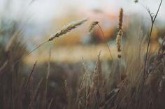 wheat fields -  wheat fields free stock photo Dimensions:3264 x 2176 Size:0.78 MB  - http://www.welovesolo.com/wheat-fields/