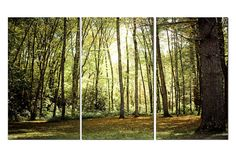North Carolina Forest Canvas Triptych 3 Panel by EyeShutterToThink, $325.00