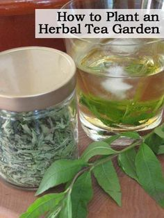 How to Plant an Herbal Tea Garden On Video  http://plantcaretoday.com/how-to-plant-an-herbal-tea-garden.html