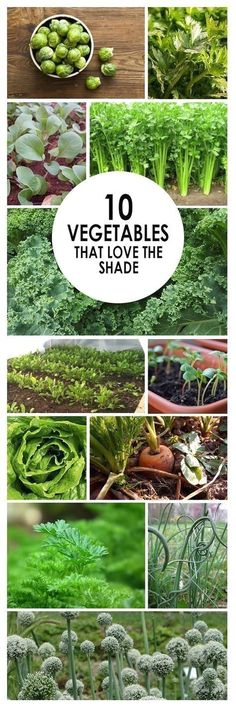 Vegetables, vegetable garden, shade vegetables, gardening 101, popular pin, gardening hacks, gardening tips. #hydroponicgardening #gardeningtips  #GardeningIdeas