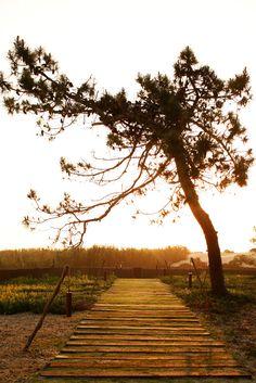 Nature Reserve, Terra, Railroad Tracks, Gabriel, Outdoor Decor, Designers, Wedding, Beautiful, Sands