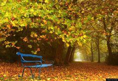 © Blende, Klaus Wendel, Herbstlaub