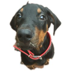 Hunde Foto: Ulrike und Cora - Aprilscherz.png Hier Dein Bild hochladen: http://ichliebehunde.com/hund-des-tages  #hund #hunde #hundebild #hundebilder #dog #dogs #dogfun  #dogpic #dogpictures