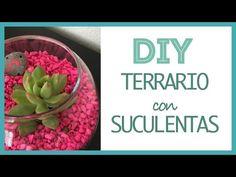 DIY Haz tu propio Terrario con Suculentas