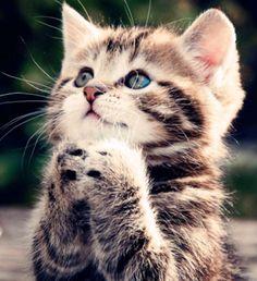 Acesse o bliog agora para saber mais sobre como adestrar gatos !