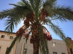 Palme a Palermo. Palazzo di giustizia