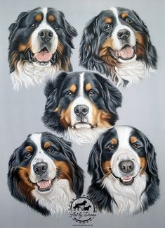 Good Cost-Free Bernese Mountain Dogs portrait Thoughts Being fully a working breed the Bernese Mountain dog is relatively high energy and require a minimum Burmese Mountain Dogs, Different Dogs, Large Dog Breeds, Dog Illustration, Dog Paintings, Bernese Mountain, Dog Portraits, Dog Art, Animal Photography