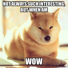 Der interessanteste Dogen der Welt - Makes me :) - Kleinkind Best Funny Pictures, Funny Photos, Funny Images, Animal Memes, Funny Animals, Cute Animals, Animal Pics, Doge Meme, Las Vegas