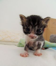 Tiniest Orphaned Kitten Found in Field Cries Out for Help, Then and Now