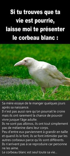 Panneau Humour Funny Facts, Funny Quotes, Melanism, Animals And Pets, Cute Animals, Jolie Phrase, Image Fun, Philosophical Quotes, Quote Aesthetic