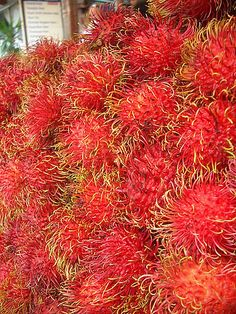 Rambutan, fruits of Thailand by Trent Strohm, via Flickr