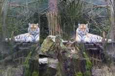 Mirror, mirror - null