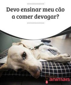 Devo ensinar meu cão a comer devagar? Seu cão come muito rápido? Cuidado, comer devagar é importante para que o seu cão não desenvolva problemas gástricos. #Conselhos
