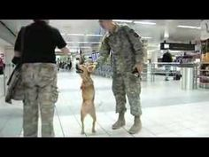 Faith the Biped Dog Visits St. Louis  What a beautiful spirit she has.........