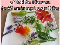 Huge List of Edible Flowers and What They Taste Like