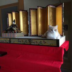 立春 今日は娘のお雛様を出しました 立春過ぎの 大安や 雨水の日に飾ると ... Follow us on Instagram :D #cats #cat #catlover #lovecats #funny #fun #cute #socute #feline #felines #felinefriend #fur #furry #paw #paws #kitten #kitty #kittens #kittycat #kittylove #fluffy #fluff