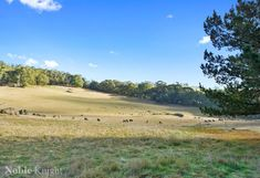 75 Jukes Road, Strathbogie VIC 3666, Image 17