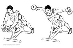 reverse flyes exercise - Google Search