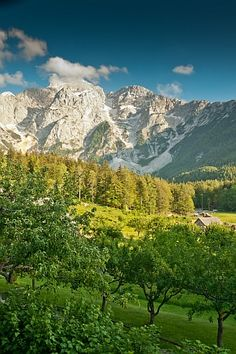 Revel in an intensive, one-week look at the Italian Dolomites and the Austrian Alps on the new Alpine Romp.