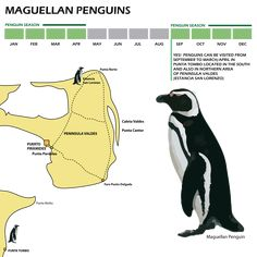 Enjoy penguins in Punta Tombo and Peninsula Valdes with RipioTurismo and Peninsula Valdes In Patagonia, Plan Your Trip, Wonderful Places, South America, Penguins, Chile, Tours, Travel, Animals