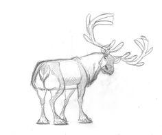 Animal Design by Barry Reynolds Reindeer Drawing, Cartoon Reindeer, Deer Cartoon, Cartoon Drawings, Animal Drawings, Cool Drawings, Drawing Animals, Pencil Drawings, Character Design Animation