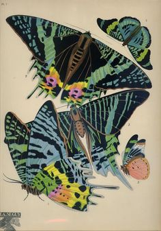 A print from one of the most spectacular and famous Art Deco works, E.A. Séguy's portfolio of 20 vibrant pochoir prints illustrating designs based on the pattern of butterflies. Seguy wanted to use his artistic skill to glorify the sublime beauty of nature. He certainly succeeded with this series.